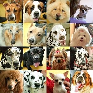 Выбираем собаку в квартиру