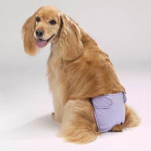 Что такое памперсы для собак