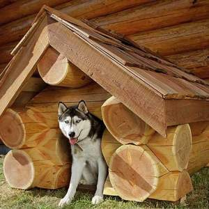 Как сделать будку для собаки