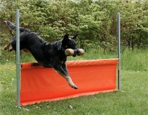 Все о том как дрессировать свою собаку дома