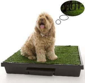Приучаем свою собаку к лотку