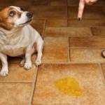 почему собака гадит дома