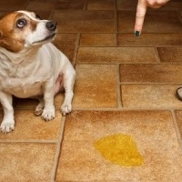 как отучить собаку гадить домама