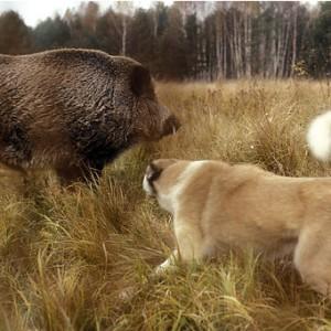 Самая лучшая собака на охоте