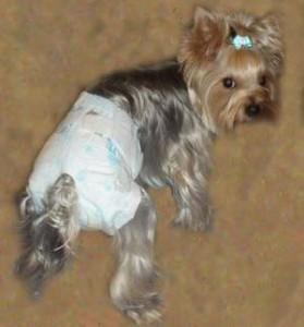 Памперсы для собак делаем сами