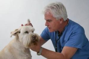 Как вылечить пироплазмоз у собаки