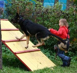 В каком возрасте можно дрессировать собаку