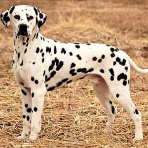 Собака для начинающего собаковода