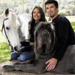 Какая самая большая порода собак на планете?