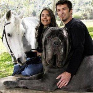 самая большая порода собак фото