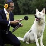 Как научить собаку команде «голос» самому, в домашних условиях