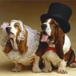 Вязка (случка) собак