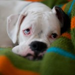 Симптомы болезней у собак