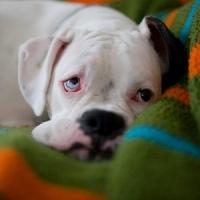 симптомы болезни собаки