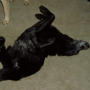 приступ эпилепсии у собак фото