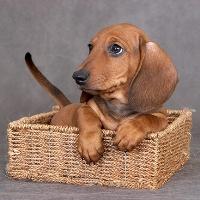 Сколько лет живут маленькие собаки