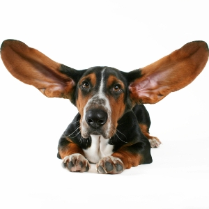Профилактика против ушного клеща