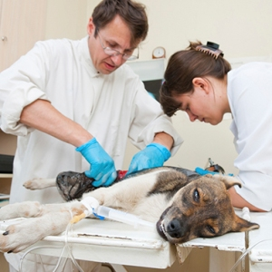 лечение эпилепсии у собак