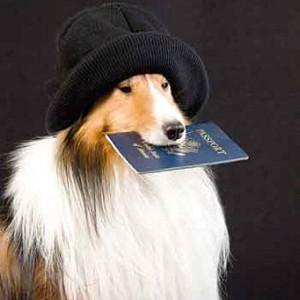 Нужно ли собаке чипирование