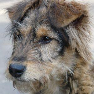 Сколько лет живут собаки дворняжки