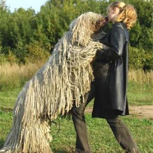 Особенности содержания собак породы комондор