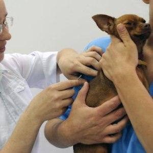 Стоимость чипирования собаки