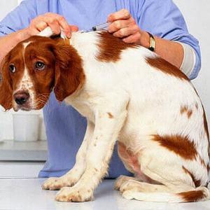 признаки бешенства у собак фото