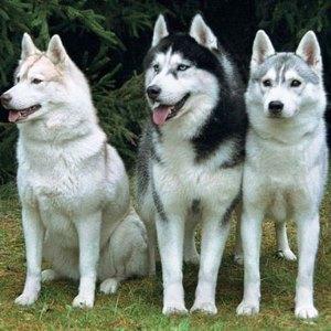 лайки фото собаки