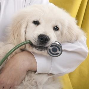 нобивак для собак инструкция фото