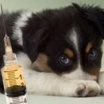 Основные прививки собакам по возрасту: таблица и описание