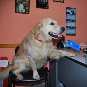 прививки собакам по возрасту таблица фото