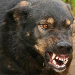 бешенство у собак фото