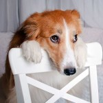 пропалин для собак фото