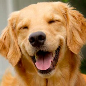 стерилизация собак плюсы и минусы фото