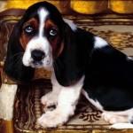 собака рвет желтой пеной фото