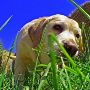 собаку рвет желтой пеной фото