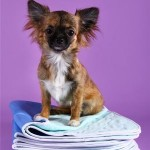 Многоразовые пеленки для собак: отзывы пользователей