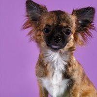 многоразовые пеленки для собак отзывы