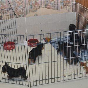 многоразовые пеленки для собак отзывы фото