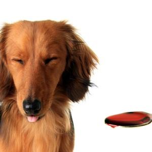 глисты у собака симптомы фото
