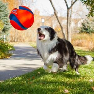 микоплазмоз у собаки фото
