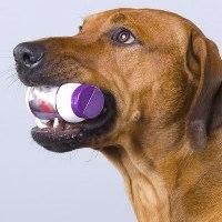 римадил для собак фото