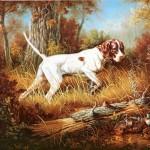 собака породы пойнтер фото