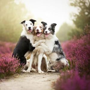 возраст собаки по человеческим меркам фото