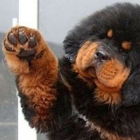 как подстригать собакам когти фото